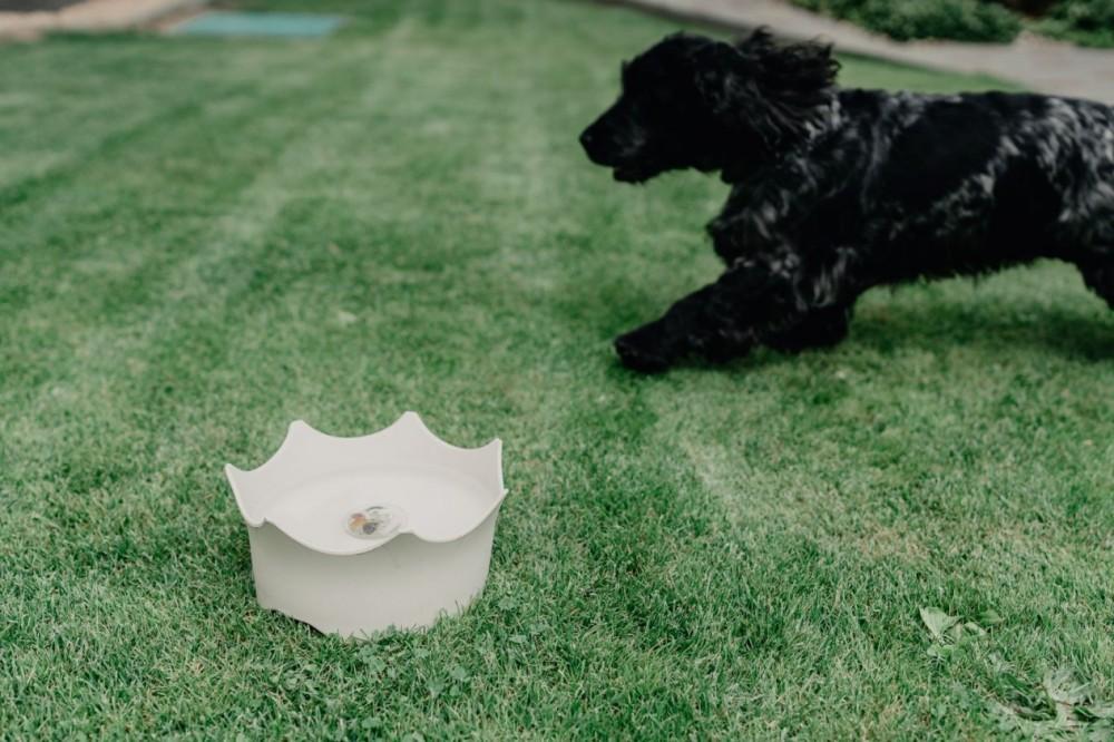 CrownJuwel pro domácí zvířata - přírodní bílá č.7
