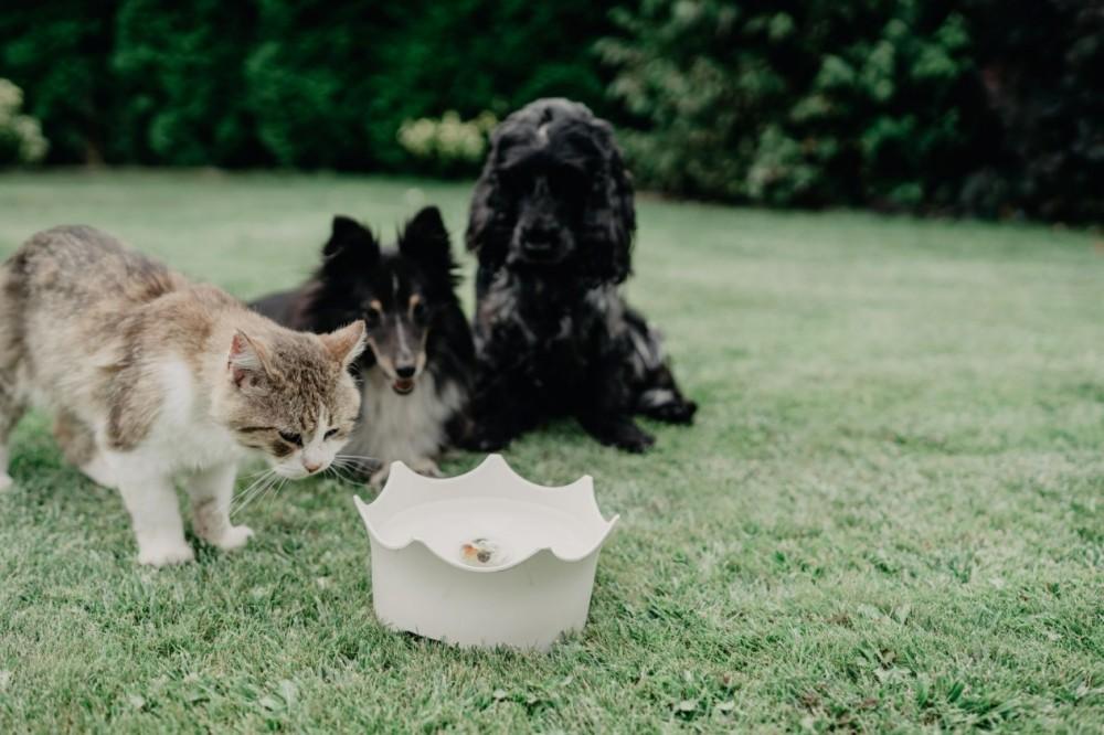 CrownJuwel pro domácí zvířata - přírodní bílá č.8