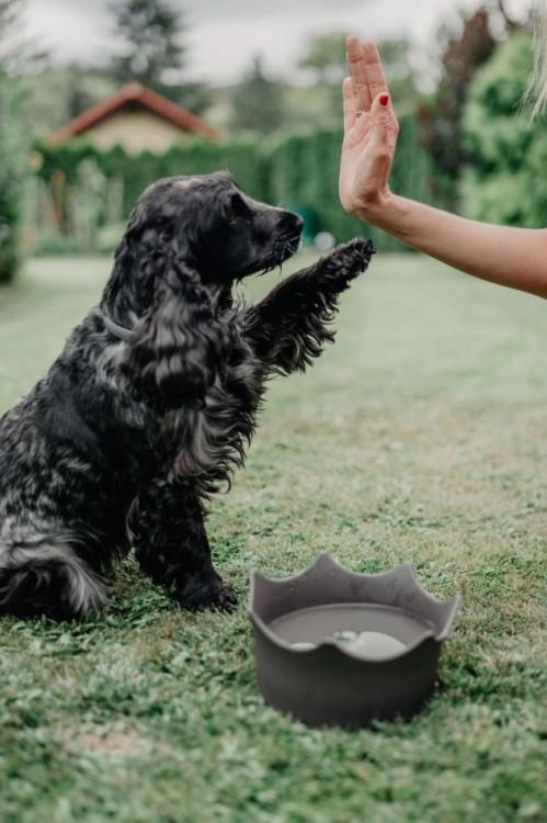 CrownJuwel pro domácí zvířata - břidlicově šedá č.6